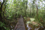 Boardwalk through a peatswamp in Borneo -- sabah_3800