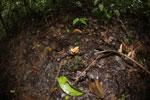 Fungi -- sabah_3808