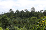 Oil palm plantation and forest in Borneo -- sabah_3824