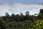 Oil palm plantation and forest in Borneo -- sabah_3825