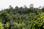 Oil palm plantation and forest in Borneo -- sabah_3826