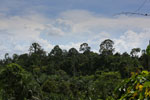 Oil palm plantation and forest in Borneo -- sabah_3827