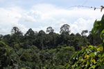 Oil palm plantation and forest in Borneo -- sabah_3828