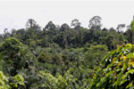 Oil palm plantation and forest in Borneo