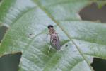 Wasp -- sabah_3880
