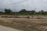 Preparing land for an oil palm plantation -- sabah_4001