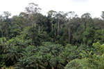 Where an oil palm plantation meets the rainforest -- sabah_4011