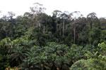 Oil palm vs rainforest -- sabah_4012