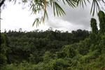 Oil palm vs rain forest -- sabah_4013