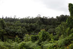 Where an oil palm plantation meets the rainforest -- sabah_4014