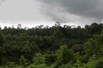 Oil palm vs rainforest -- sabah_4015