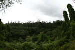 Oil palm vs rain forest -- sabah_4016