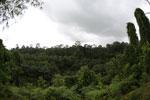 Where an oil palm plantation meets the rainforest -- sabah_4017