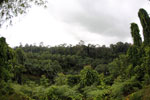 Oil palm vs rainforest -- sabah_4018