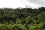 Oil palm vs rain forest -- sabah_4019