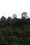 Where an oil palm plantation meets the rainforest -- sabah_4020