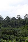 Where an oil palm plantation meets the rainforest
