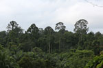 Oil palm vs rain forest -- sabah_4025