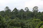 Where an oil palm plantation meets the rainforest -- sabah_4026