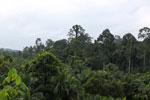 Oil palm vs rainforest -- sabah_4027