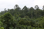 Where an oil palm plantation meets the rainforest -- sabah_4029