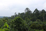 Oil palm vs rain forest -- sabah_4031