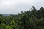 Where an oil palm plantation meets the rainforest -- sabah_4032