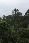Oil palm vs rainforest -- sabah_4033