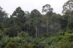 Where an oil palm plantation meets the rainforest -- sabah_4035