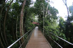 Rainforest walkway at Sepilok