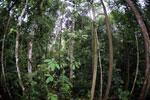 Borneo rainforest -- sabah_4044