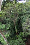 View from the Borneo rainforest canopy