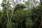 View from the Borneo rainforest canopy -- sabah_4119