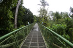 Canopy walkway at the Rainforest Discovery Center