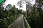 Canopy walkway at the Rainforest Discovery Center -- sabah_4133