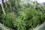 View from a canopy walkway