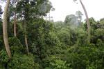 Borneo rainforest -- sabah_4135