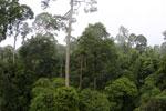 Borneo rainforest -- sabah_4141
