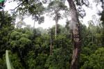Borneo rainforest -- sabah_4142