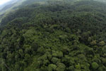 Oil palm plantation and rainforest in Borneo