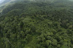 Oil palm plantation and rainforest in Borneo -- sabah_aerial_0002