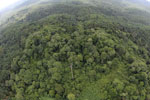 Oil palm plantation and rainforest in Borneo -- sabah_aerial_0003