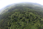Oil palm plantation and rainforest in Borneo -- sabah_aerial_0005