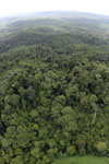 Oil palm plantation and rainforest in Borneo -- sabah_aerial_0007