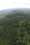 Oil palm plantation and rainforest in Borneo -- sabah_aerial_0008
