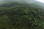 Oil palm plantation and rainforest in Borneo -- sabah_aerial_0012