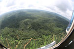 Oil palm plantation in Borneo -- sabah_aerial_0013