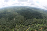 Oil palm plantation in Borneo -- sabah_aerial_0014