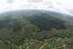 Oil palm plantation in Borneo -- sabah_aerial_0014