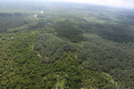 Oil palm plantation and mangroves in Borneo -- sabah_aerial_0015